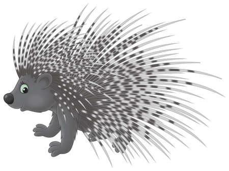 cartooning: Porcupine