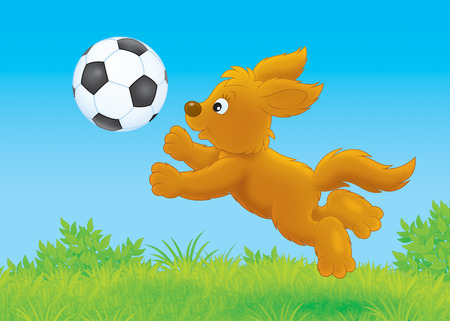lapdog: Funny brown puppy playing a football