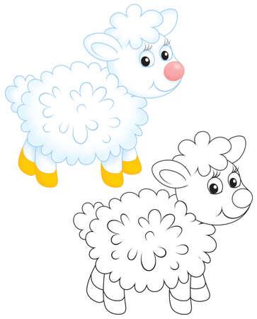 ewe: Lamb