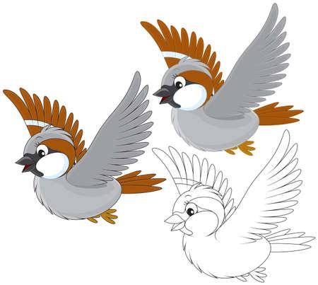 white bird: Little sparrow flying