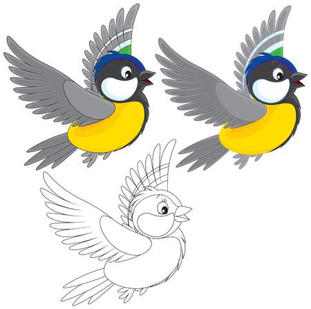 songbird: Titmouse Illustration