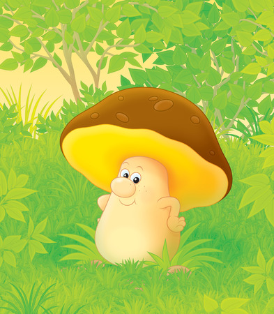 glade: Funny mushroom in a forest glade