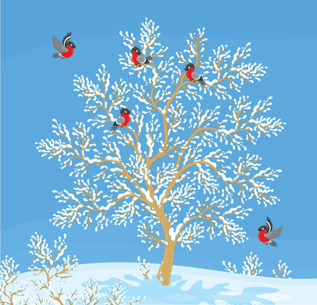 snowed: bullfinches on a snow-covered tree Illustration