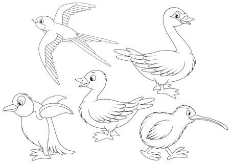 black swan: Martin, duck, swan, kiwi and penguin Illustration