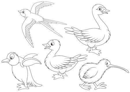 cisnes: Martin, pato, cisne, el kiwi y el pingüino Vectores