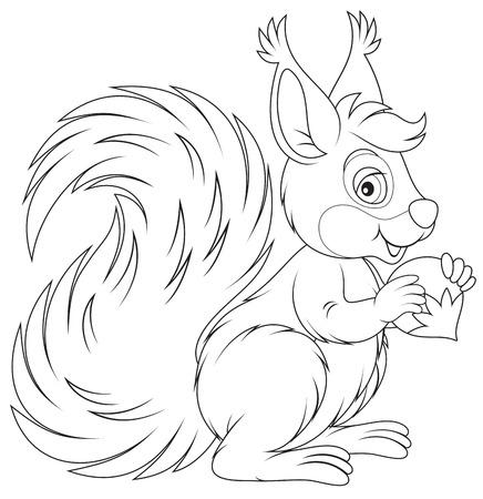 Squirrel Stock Vector - 25247839