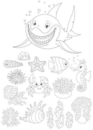 sand dollar: Sea animals Illustration