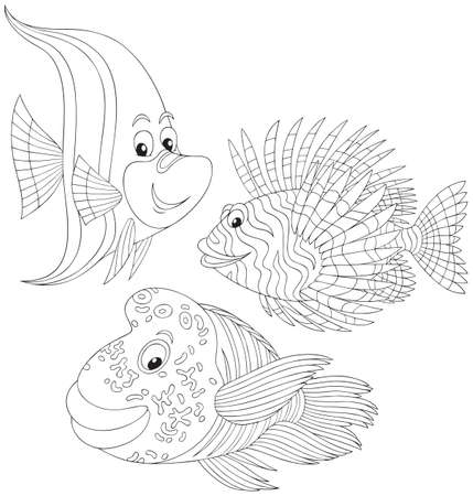 Coral fishes Vector