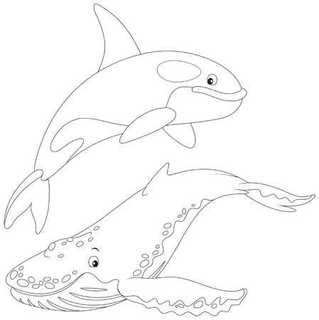 killer whale and hunchbacked whale Illustration