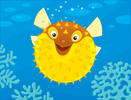 blowfish: Puffer pescado