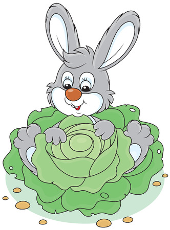 Bunny with a cabbage Vector