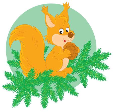 fir cone: Peque�a ardilla con un cono en una rama de abeto
