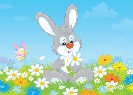 ox eye daisy: Bunny with a daisy