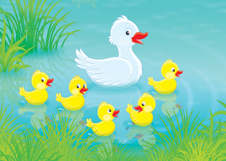 swimming bird: Duck and ducklings