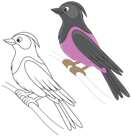 Starling Vector