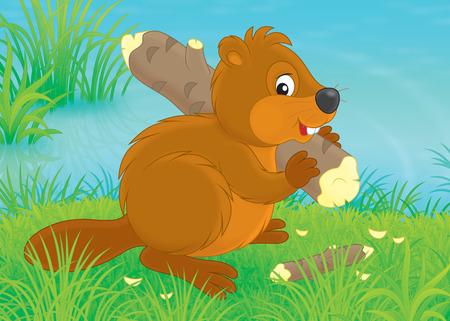 gnawer: Beaver