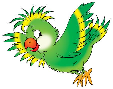 pajaro caricatura: Parrot  Foto de archivo