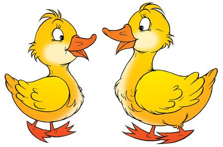 animate: Ducks