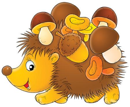 wild mushrooms: Hedgehog