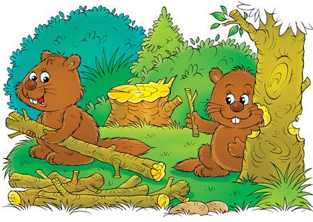 animal mole: Beavers Stock Photo