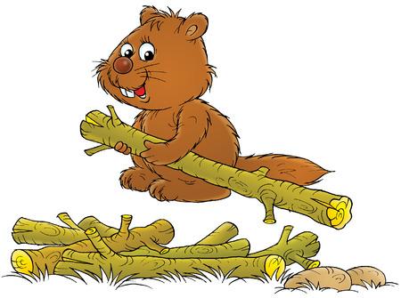castoro: Beaver