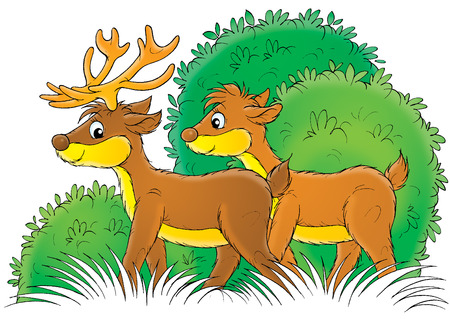 thickets: Deer