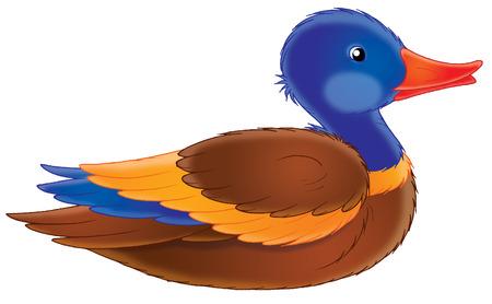 pato caricatura: pato Foto de archivo