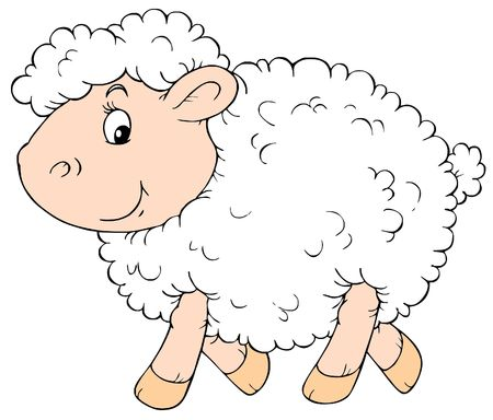 zoological: White Sheep