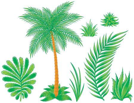 cartoon palm tree: Palm tree