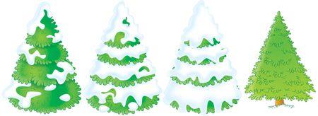 firtree: Fir trees Stock Photo