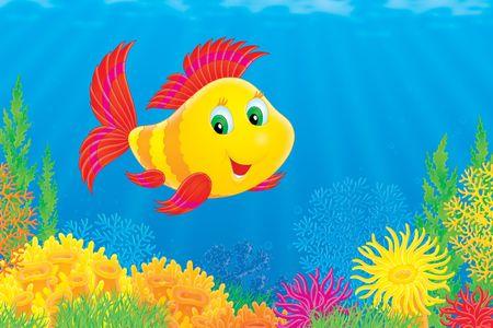 fondali marini: Corallo di pesce