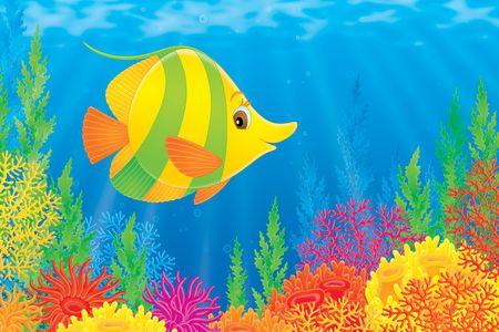 actinia: Peces de coral
