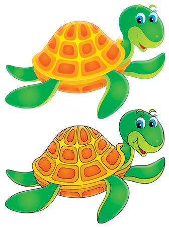 green sea turtle: Turtle (color and black contours)
