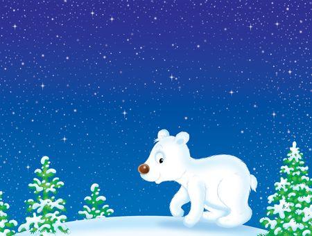 bear cub: Polar Bear walking in winter forest Stock Photo