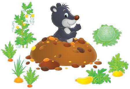 animal mole: Mole in kitchen garden