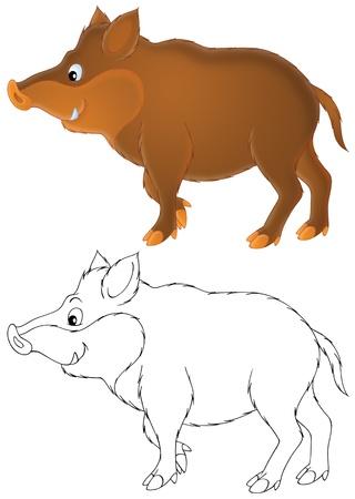 wild boar: Wild boar