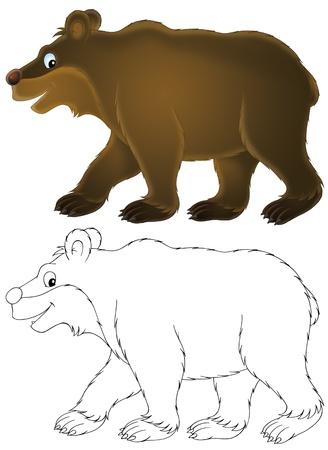 brown bear: brown bear
