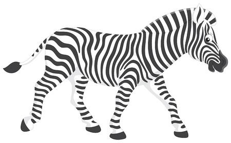 hoofed mammal: Zebra Illustration