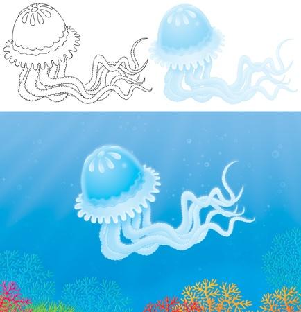 blubber: Jelly-fish Stock Photo