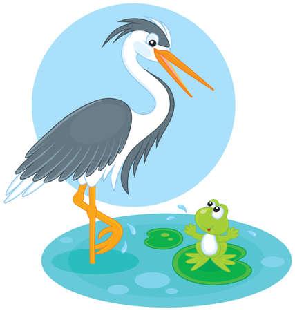 wader: Heron and frog