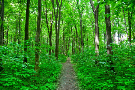nature path in the green summer forest photo
