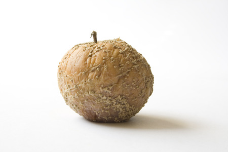 putrid: putrid apple on white