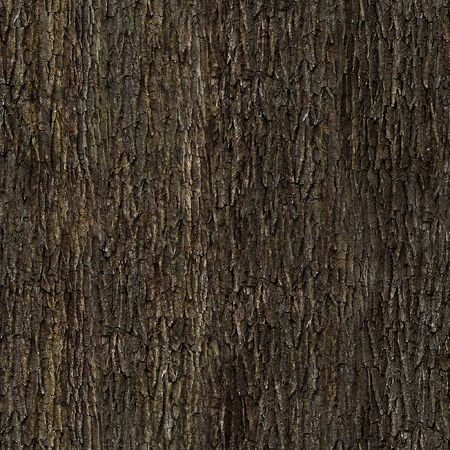 bark: Oak bark tile texture