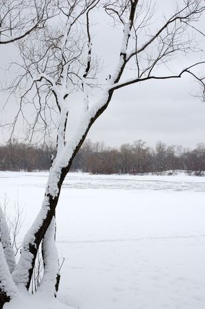 An inclined tree covered in snow on a bank of a frozen river Dnepr in Kiev, Ukraine, winter Stock Photo - 342201