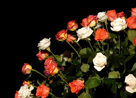 White and red roses on black background photo