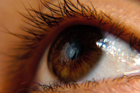restrict: Brown female eye macro image