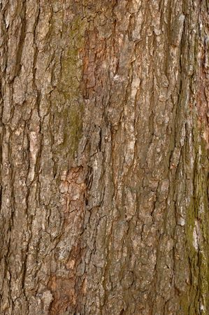 Tree bark texture background Stock Photo - 379850