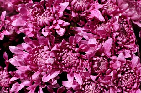 astern: Bunch of purple milady asters flowers background Stock Photo