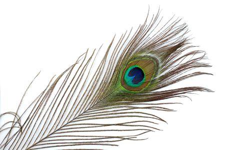 pluma de pavo real: Coloridas plumas del pavo resumen de antecedentes Foto de archivo
