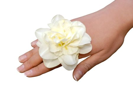 narcissist: White narcissus on a female hand closeup isolated on white background